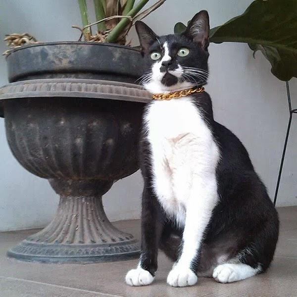Puciy, kucingku yang macho.