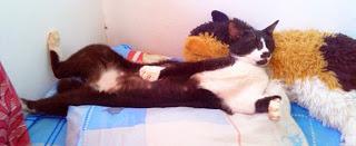 Puciy tidur pewe dengan boneka kucingku. Kaki segala nempel di dinding.
