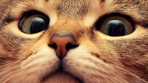 Gambar kucing ukuran 300px dengan cara Save as biasa.
