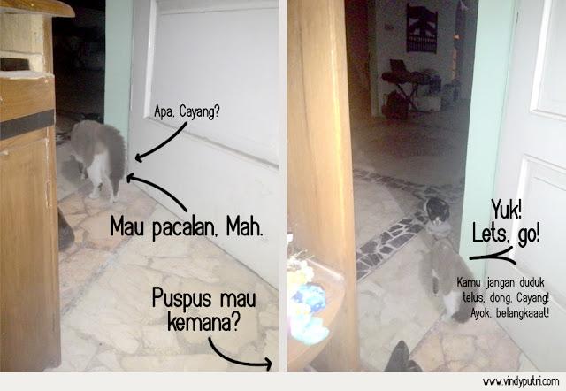 Komik Kucing - Puspus Mulai Pacaran 2