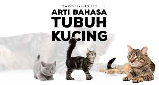 Arti Bahasa Tubuh Kucing