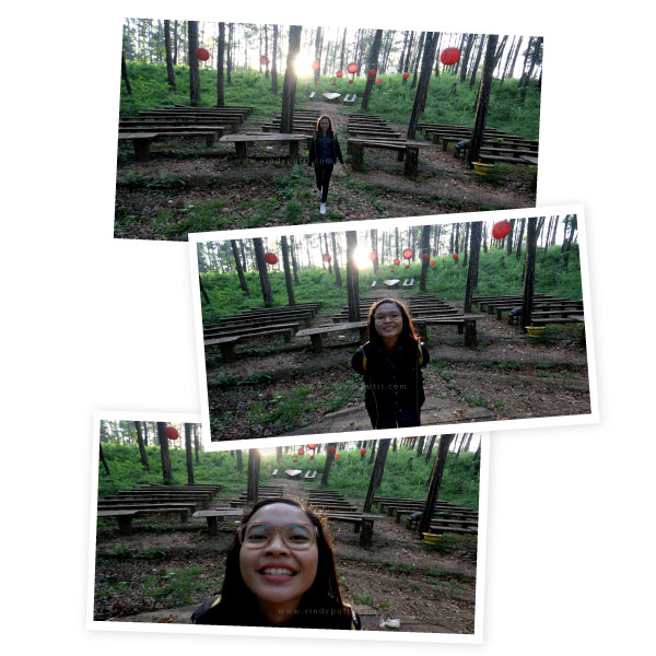 Hutan Pinus Tasnan Bodowoso