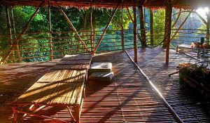 Terra's Tree House Pahang